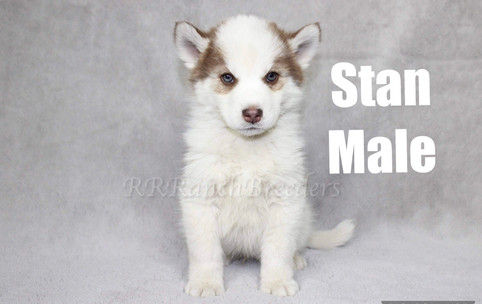 Male $1,700 READY TO COME HOME NOW