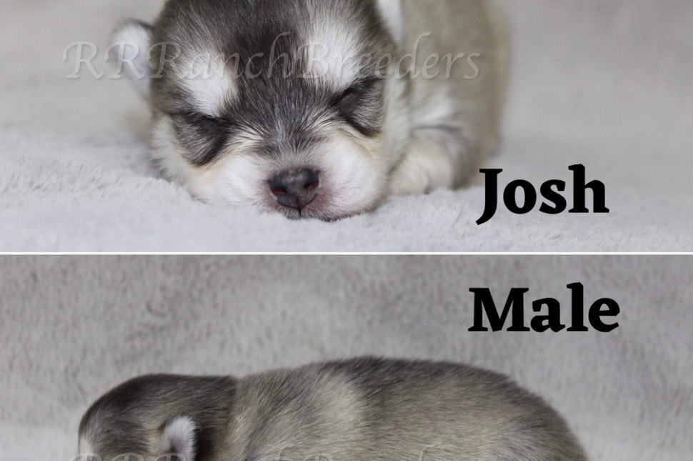 Josh Male