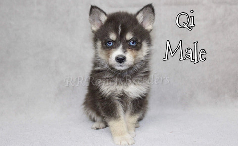 Male $1,800 READY TO COME HOME NOW