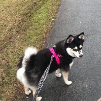 Mika (FKA Penny)