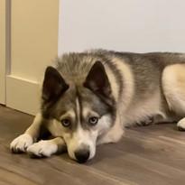 Zeus (FKA Pete)