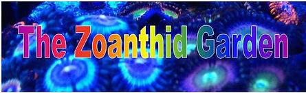 zoanthid garden.jpg