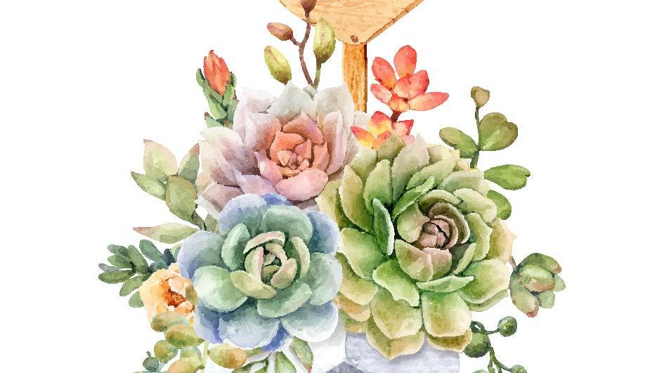 Love Succulente
