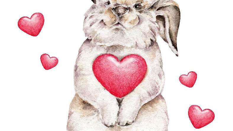 Coniglio D'Amore