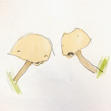 Mushroom Gossip