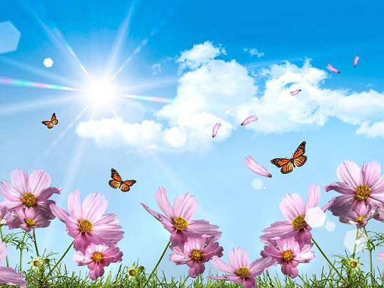 vlinders en bloemen.jpg
