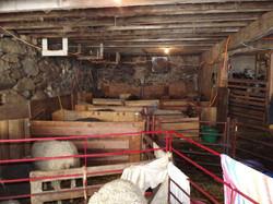 Full house in the barn