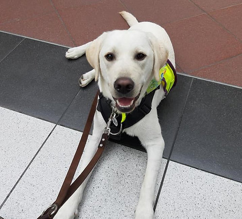 ISCP Certificate in Assistance Dog Training