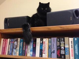 New Associate, Allie The Cat