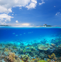 Остров коралловых рифов