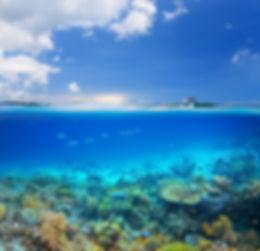 Oceano Isla Coral Reef