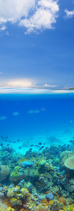 Ilha dos recifes de coral