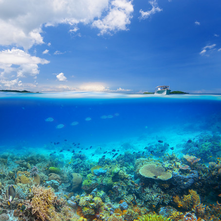 Paradise Lost: The Historical Demise of Florida Reef