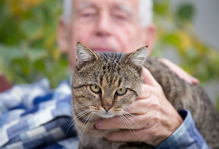 Close up of cat sitting in old man's lap and enjoying cuddling.jpg