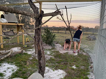 lemur enclosure 2.jpg