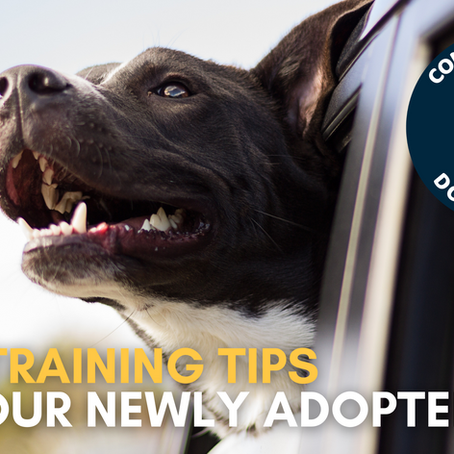 Top 5 Training Tips for Your Newly Adopted Dog