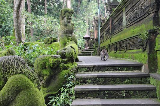 живые и каменные обезьяны