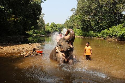 слоновий душ на гоа