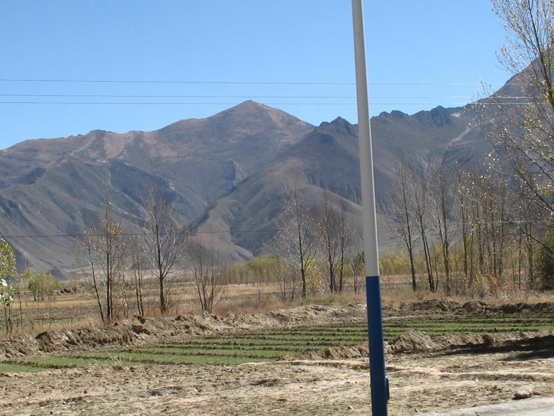 ячменное поле в Тибете