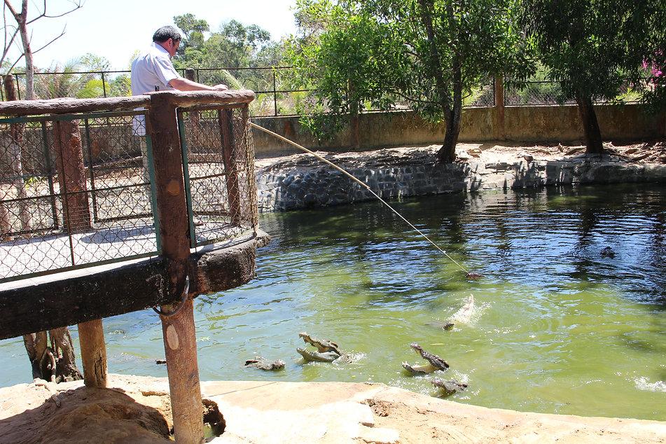 крокодилы активировались