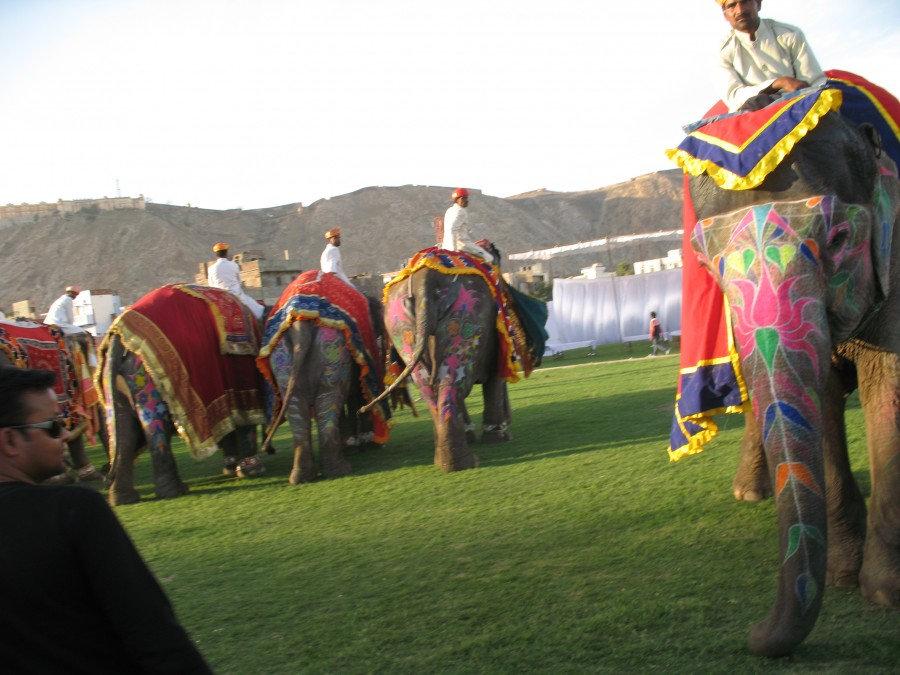 слоны на параде
