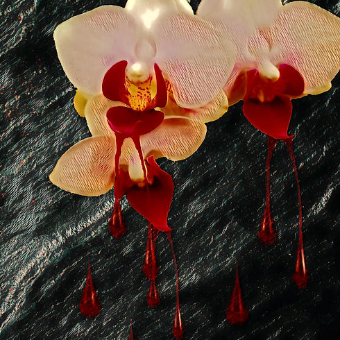 Melody's Orchid.jpg