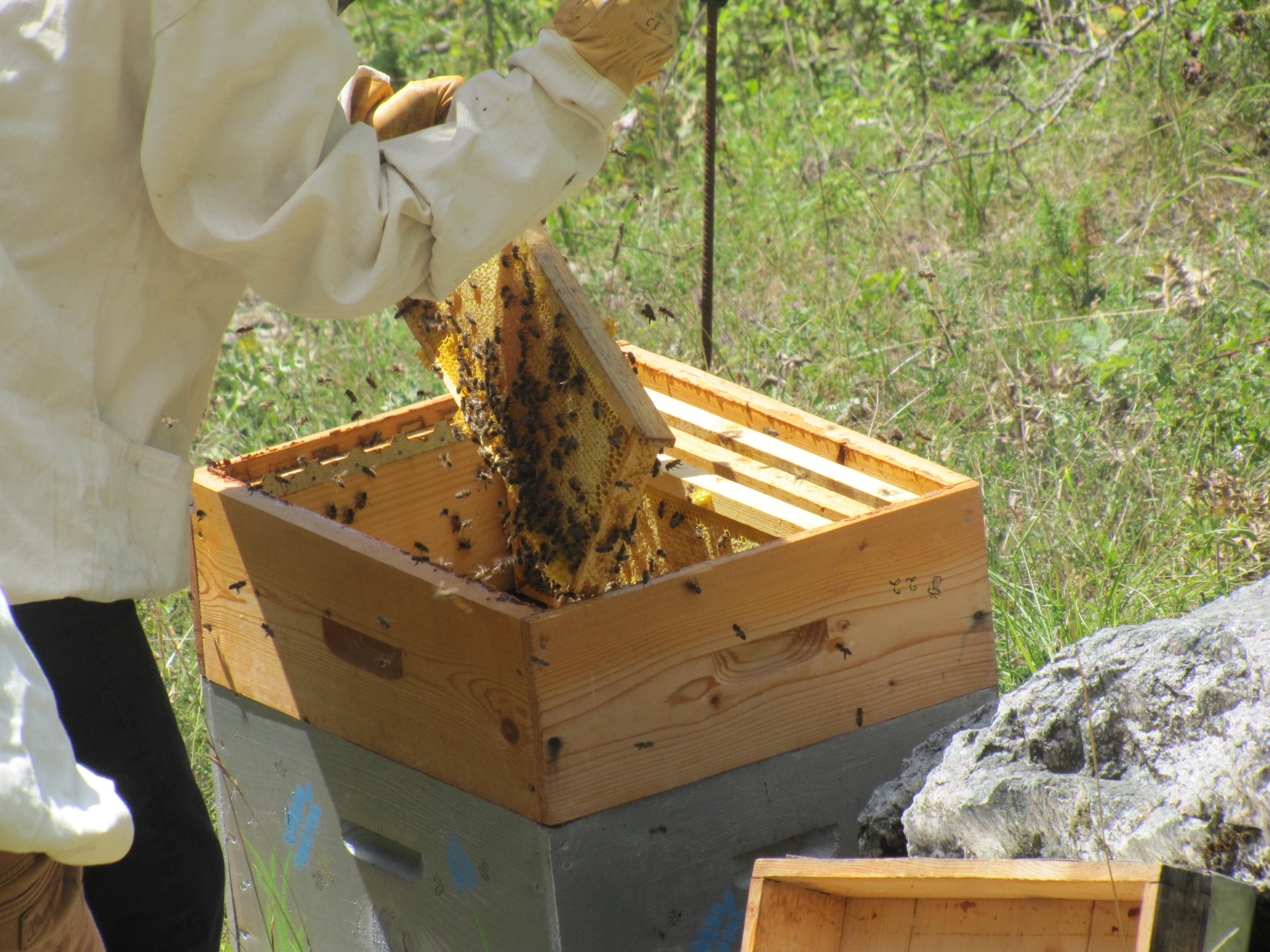 Une hausse pleine de miel