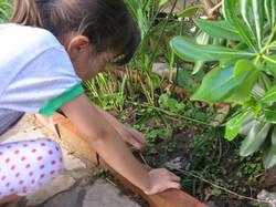 jardin huerta2