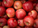 nash farms apples