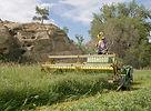 jerry swathing hay