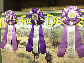 Utah State Fair ribbons