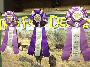 Utah State Fair ribbons