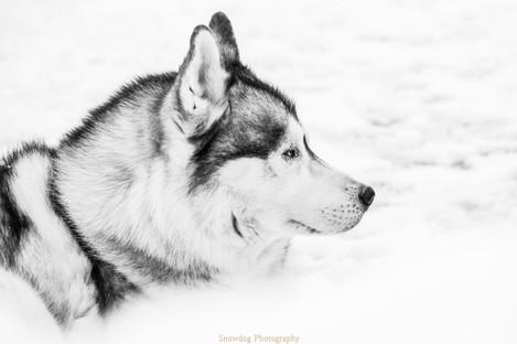Snowdog Photography -0031 (2).JPG