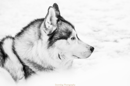 Snowdog Photography -0031 (2).JPG