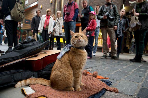 Livro Um Gato de Rua Chamado Bob