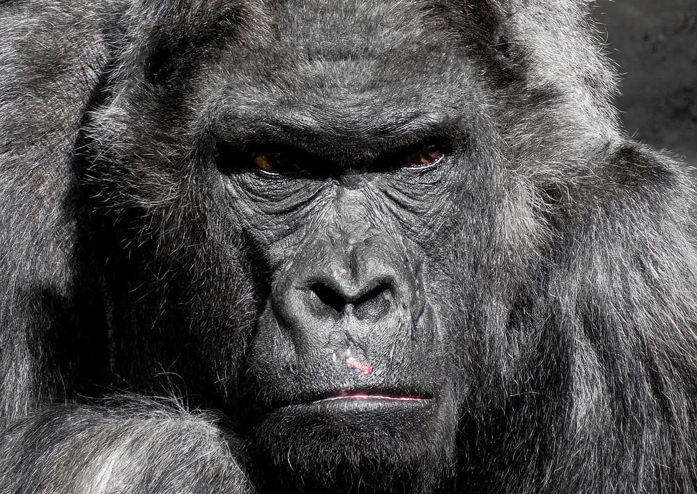 Livro O Orangotango Marxista