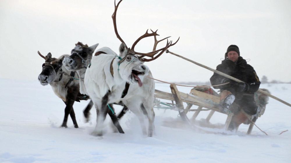 Filme O Conto da Tundra