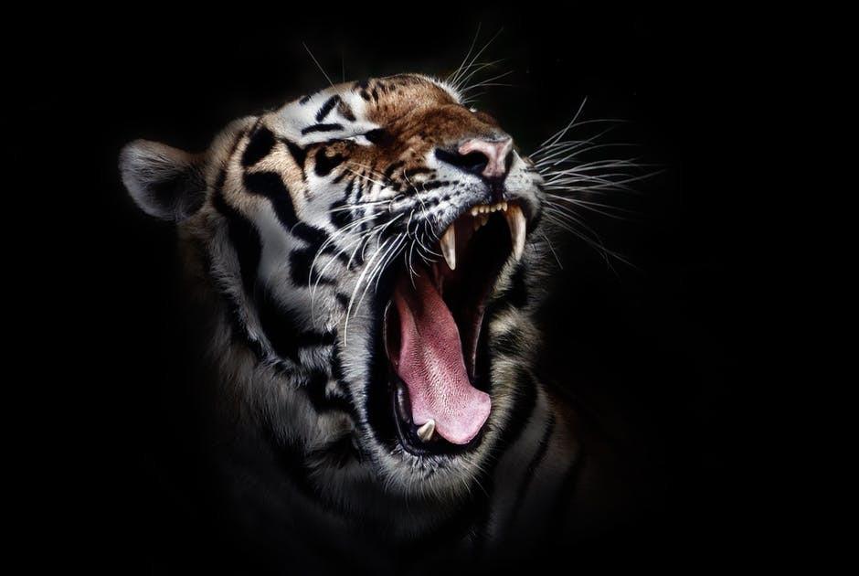 O Tigre na Sombra Lya Luft