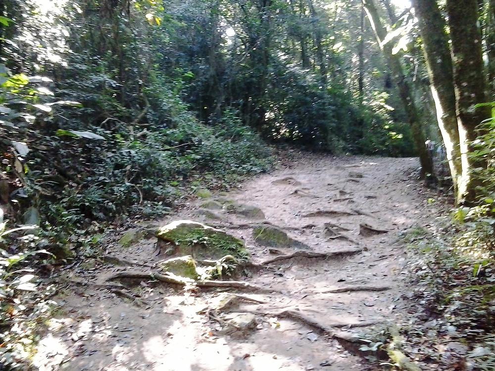 Trilha do Pai Zé - Pico do Jaraguá