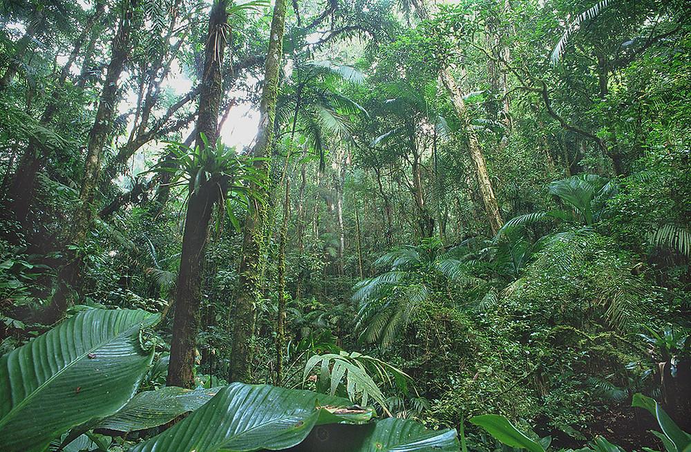 O Guarani José de Alencar
