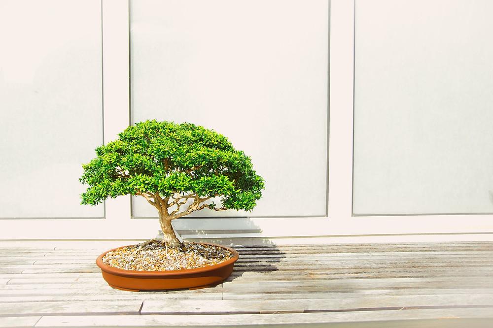 Livro Bonsai