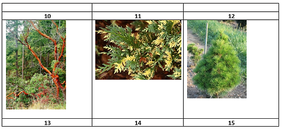 Trees Trivia 2.PNG