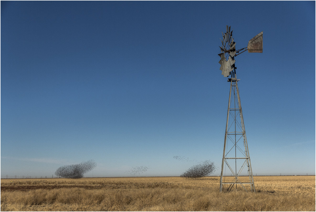 Blackbirds, Spearman, 2014