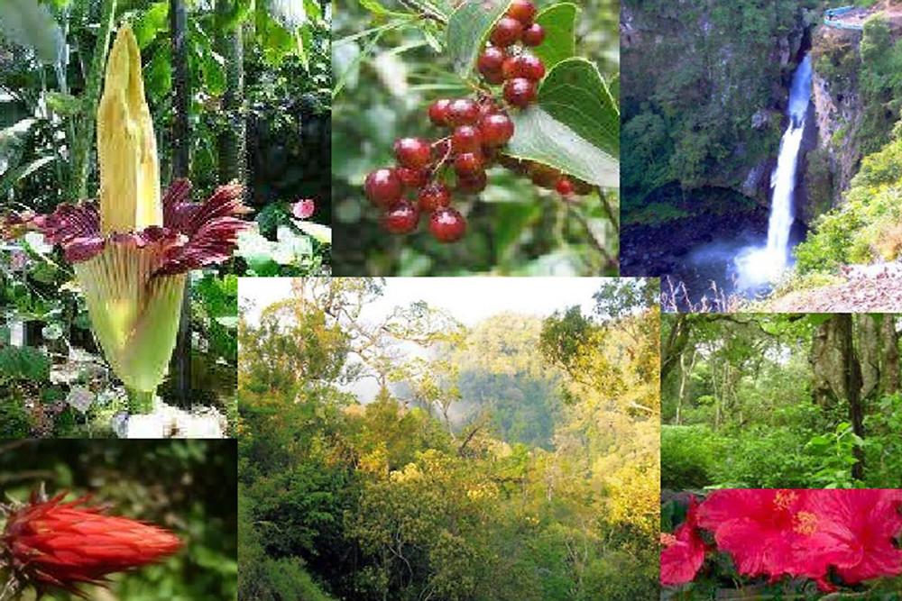 Vegetación de Veracruz/MéxicoViajes