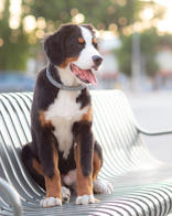 Pet-Photographer-in_Los-Angeles_035.jpg