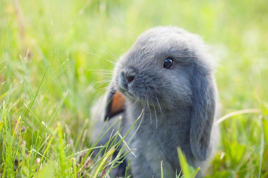 Animal-Photographer-Irina-Logra-037.jpg