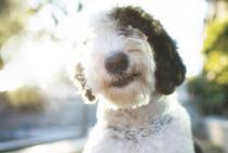 Pet-Photographer-in_Los-Angeles_023.jpg