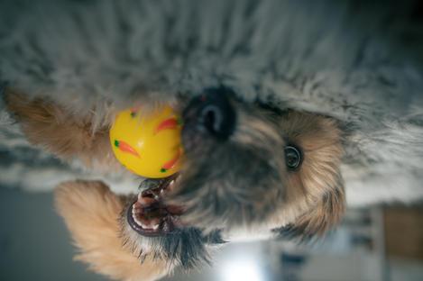 Pet-Photographer-in_Los-Angeles_033.jpg