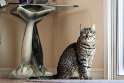 Animal-Photographer-Irina-Logra-029.jpg