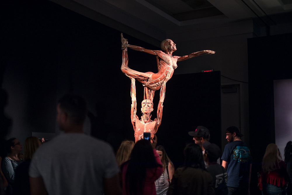 A very weird place: The Body Worlds exhibition